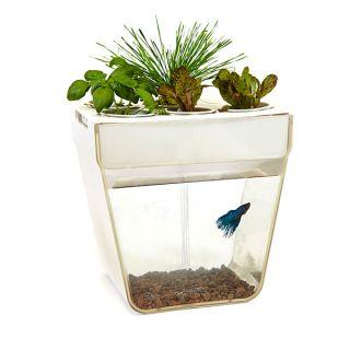 Aquafarm: Aquaponics Fish Garden