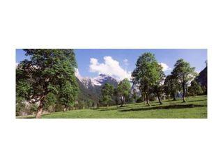 Maple trees with mountain range in the background, Karwendel Mountains, Risstal Valley, Hinterriss, Tyrol, Austria Print