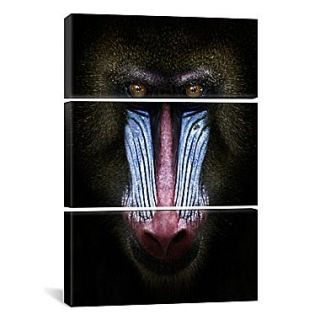 iCanvas SD Smart Mandrill 3 Piece Photographic Print on Wrapped Canvas; 60 H x 40 W x 1.5 D