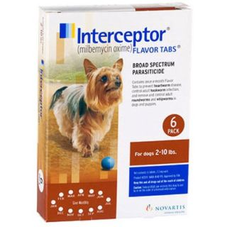 Interceptor   Dog