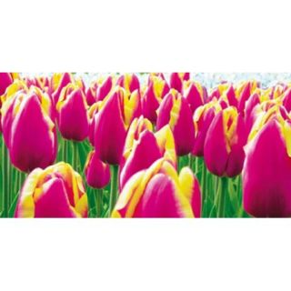 Tulips Poster Print by Jan Lens (20 x 9)